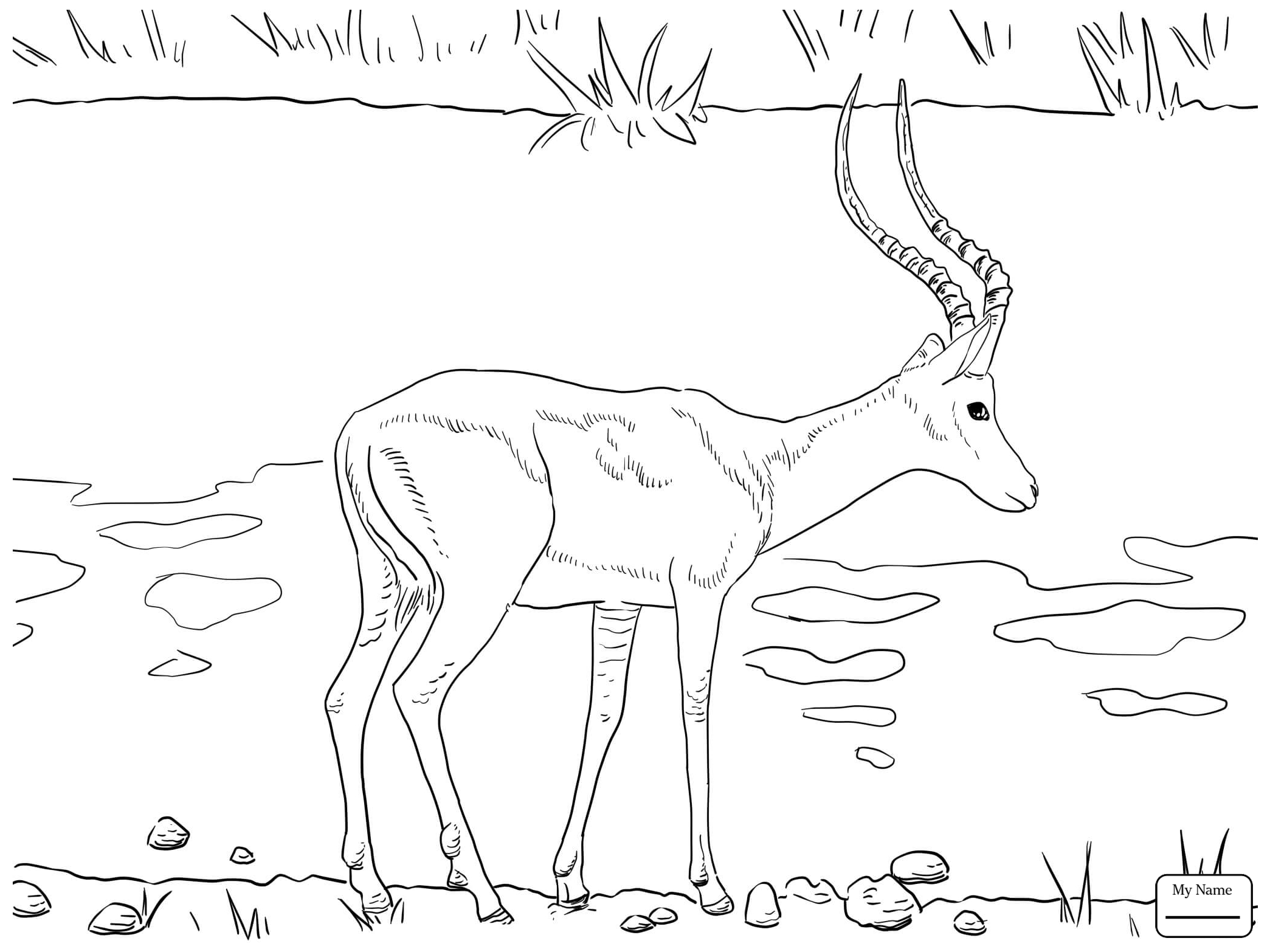 2089x1566 Realistic Black Wildebeest Mammals Antelopes Coloring Pages