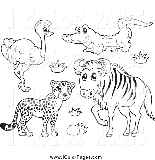 600x620 Vector Coloring Page Of A Lineart Cheetah Ostrich Crocodile