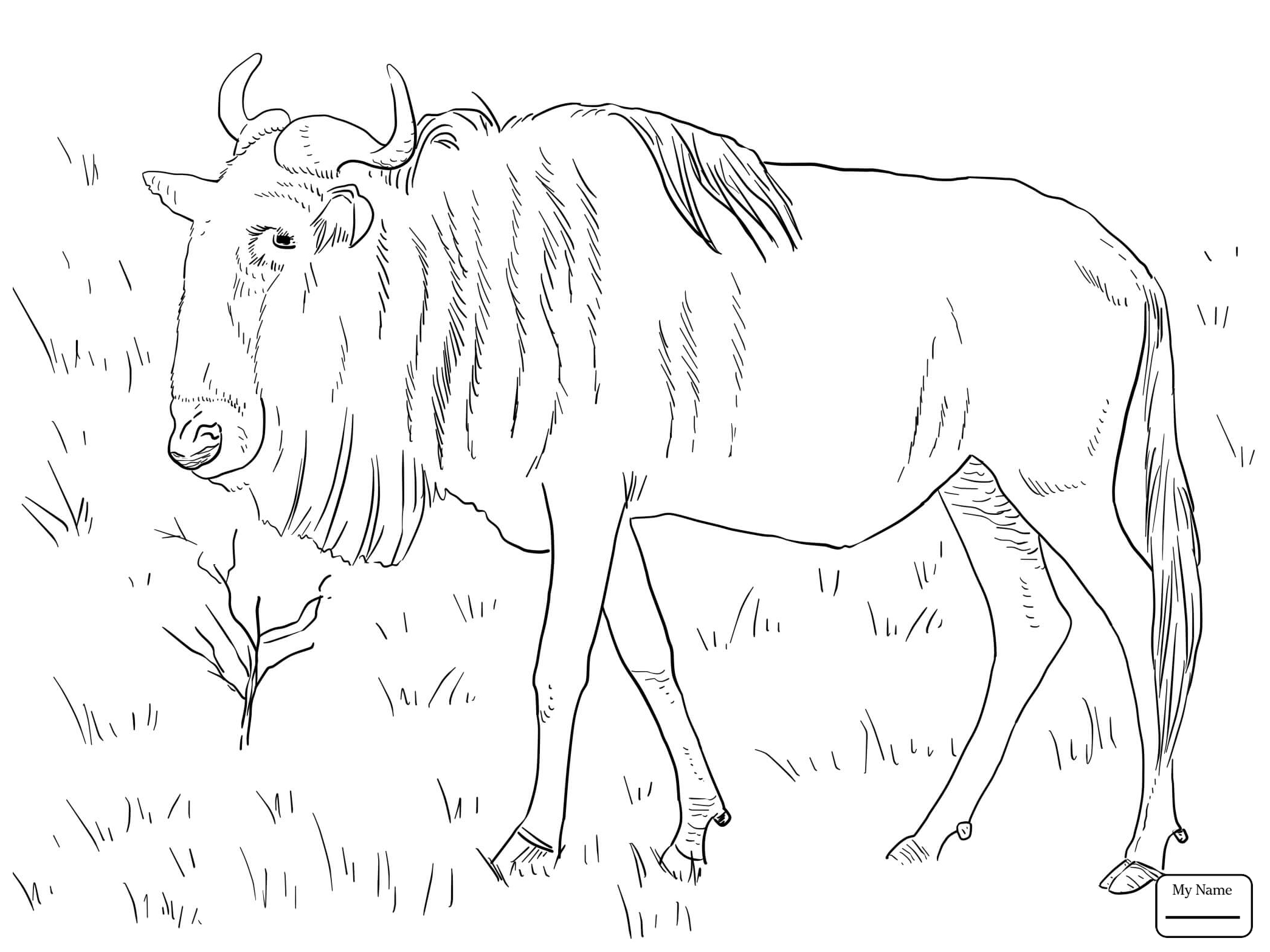 2089x1566 Wildebeest Coloring Sheet In Cure Page Photo Mammals Black Gnu