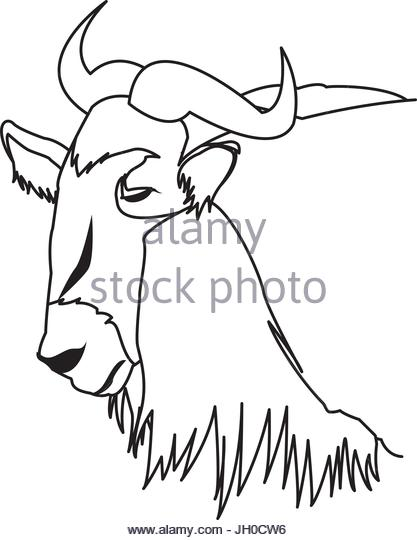 417x540 Wildebeest Cut Out Stock Images Amp Pictures