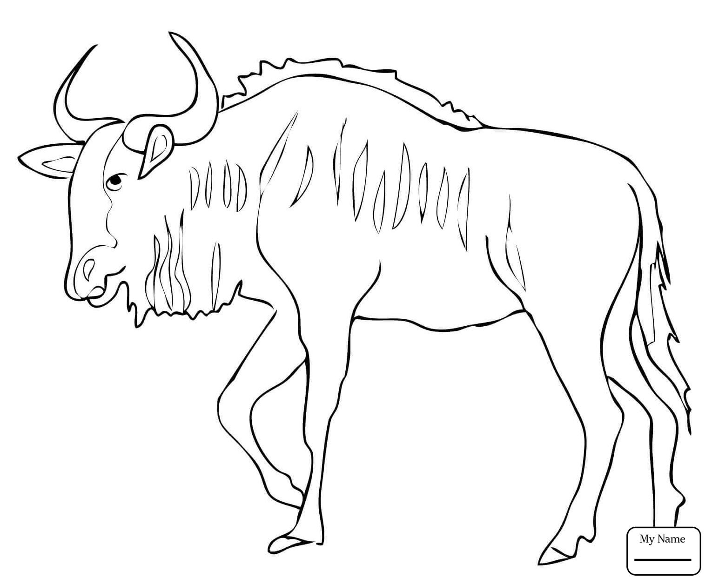 1530x1257 Black Wildebeest Gnu Mammals Wildebeest Coloring Pages For Kids