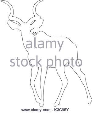 300x367 Wildebeest On A White Background Stock Photo 58557744