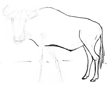 378x300 Wildebeest Drawing 020