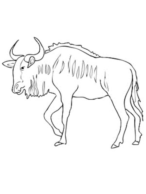 600x798 Wildebeest Coloring Pages Coloring Kids