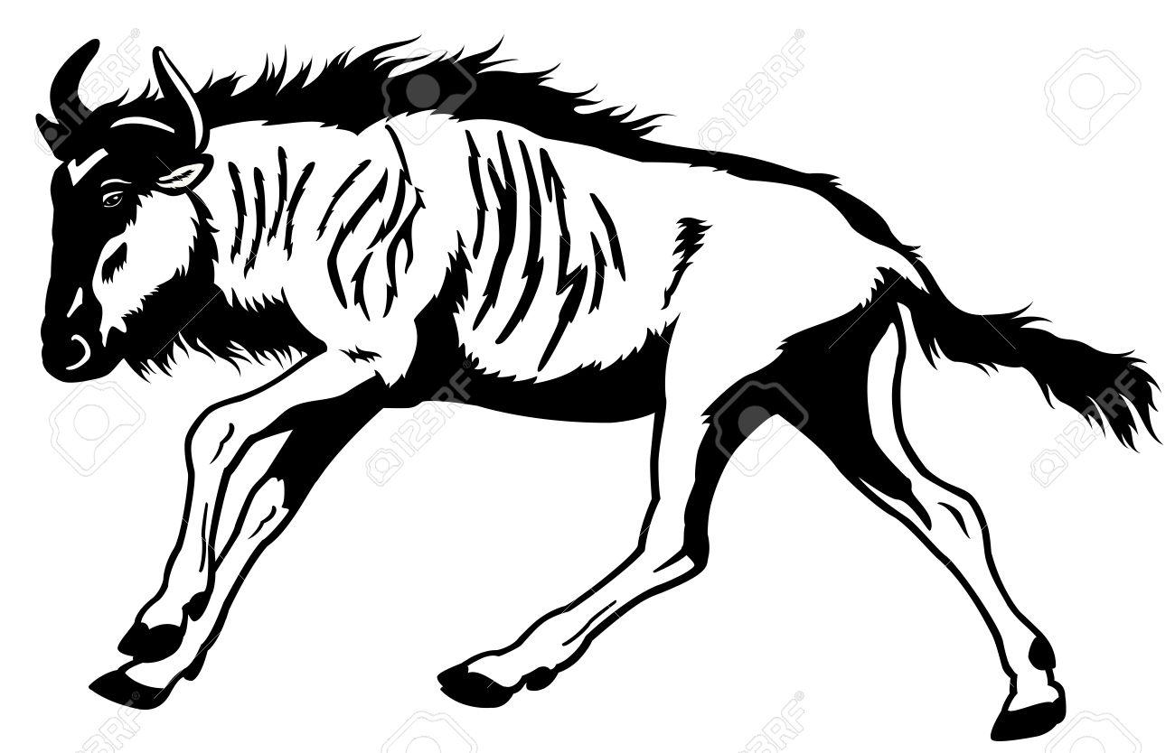 1300x834 Blue Wildebeest,connochaetes Taurinus,wild Animal Of Africa,side