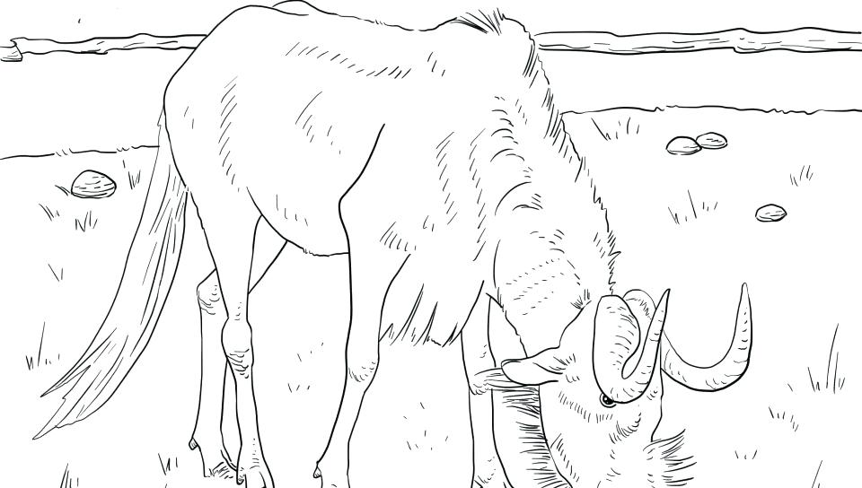 960x544 Gnu Coloring Pages Fishing On A Boat With Polar Bear Coloring Page