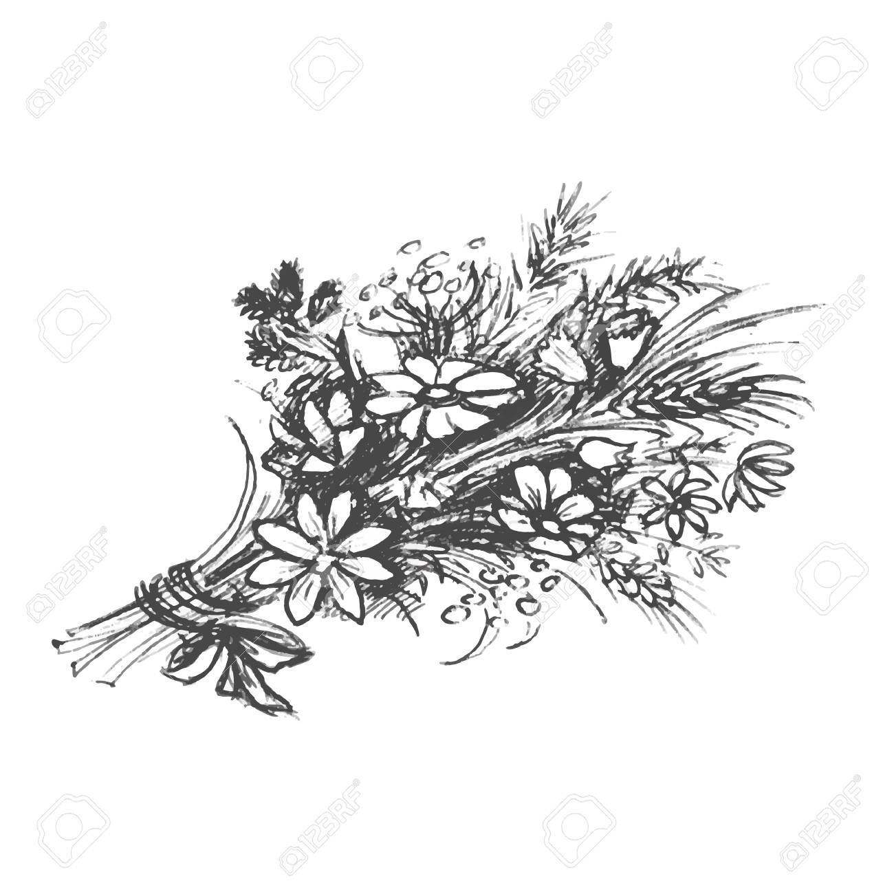 Wildflower Line Drawing : Wildflower bouquet drawing at getdrawings free for