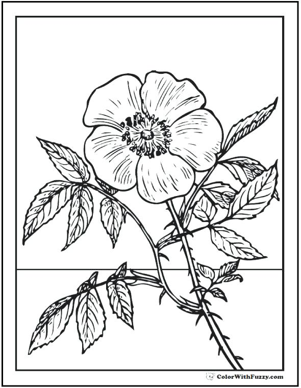 590x762 Wildflower Coloring Pages Rose Coloring Pages Customize Printable