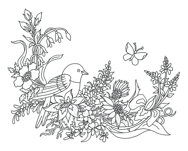 720x576 Wildflower Coloring Pages Zoom Celebrating Wildflowers Coloring