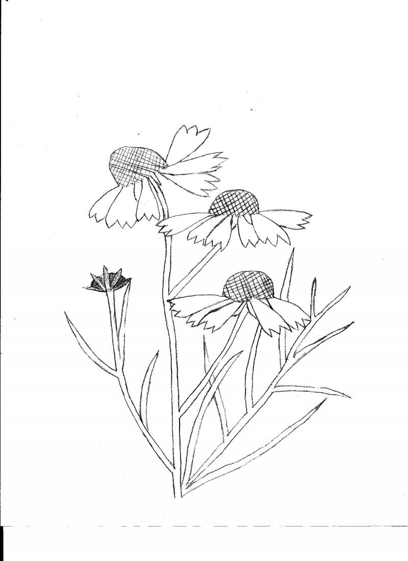 800x1100 Wildflower Coloring Pages