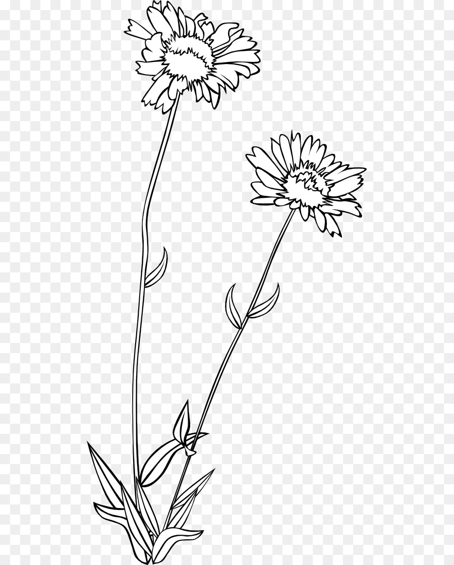 900x1120 Wildflower Drawing Clip Art