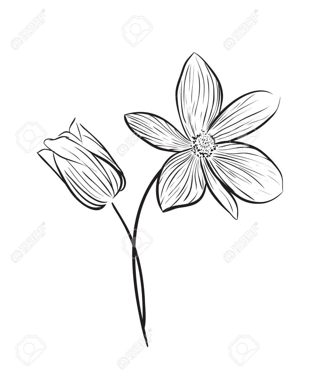 1105x1300 Wildflower Vector Icon Royalty Free Cliparts, Vectors, And Stock