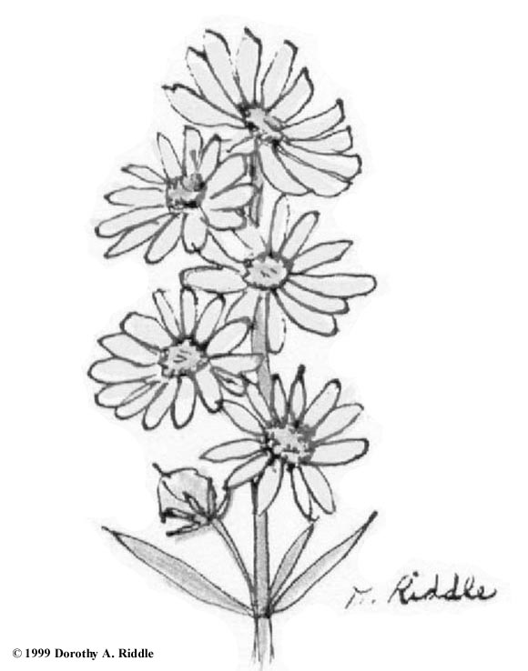 coloring pages for kids wild flowers | Wildflowers Drawing at GetDrawings.com | Free for personal ...