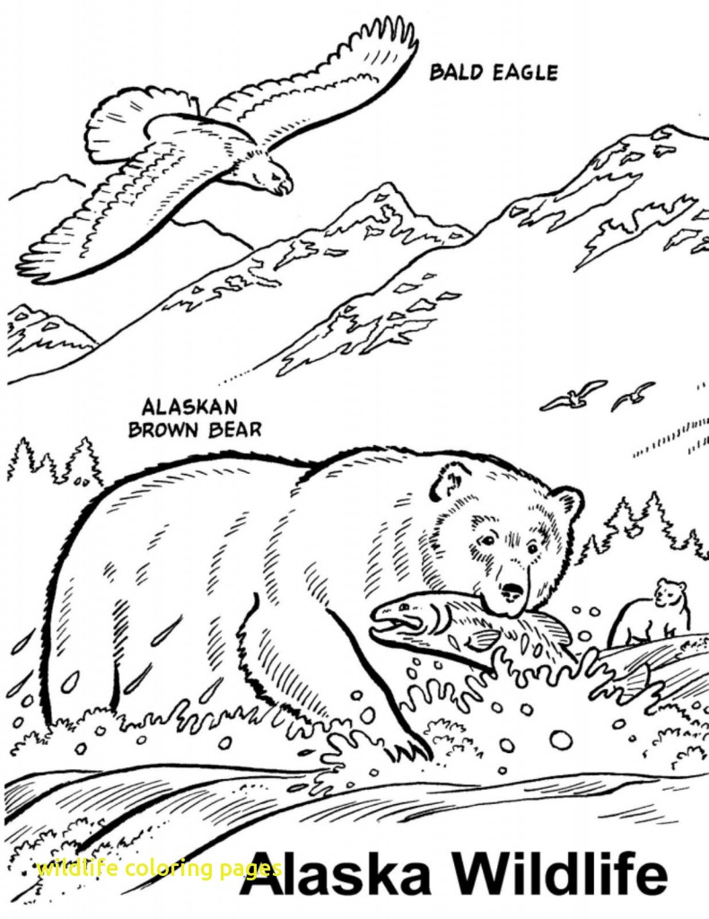 790x1024 Wildlife Coloring Pages With Wildlife Coloring Pages Printable
