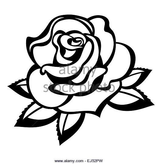 520x540 Single Flower Rose Bud Silhouette Stock Photos Amp Single Flower