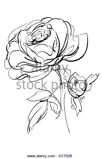 347x540 Single Flower Rose Bud Silhouette Stock Photos Amp Single Flower