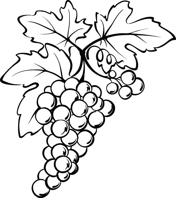 600x677 Grapes From Spain Coloring Pages Color Luna