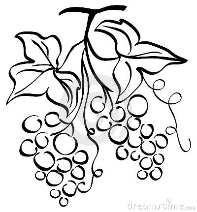 Wine Grapes Drawing At Getdrawings Com Free For Personal