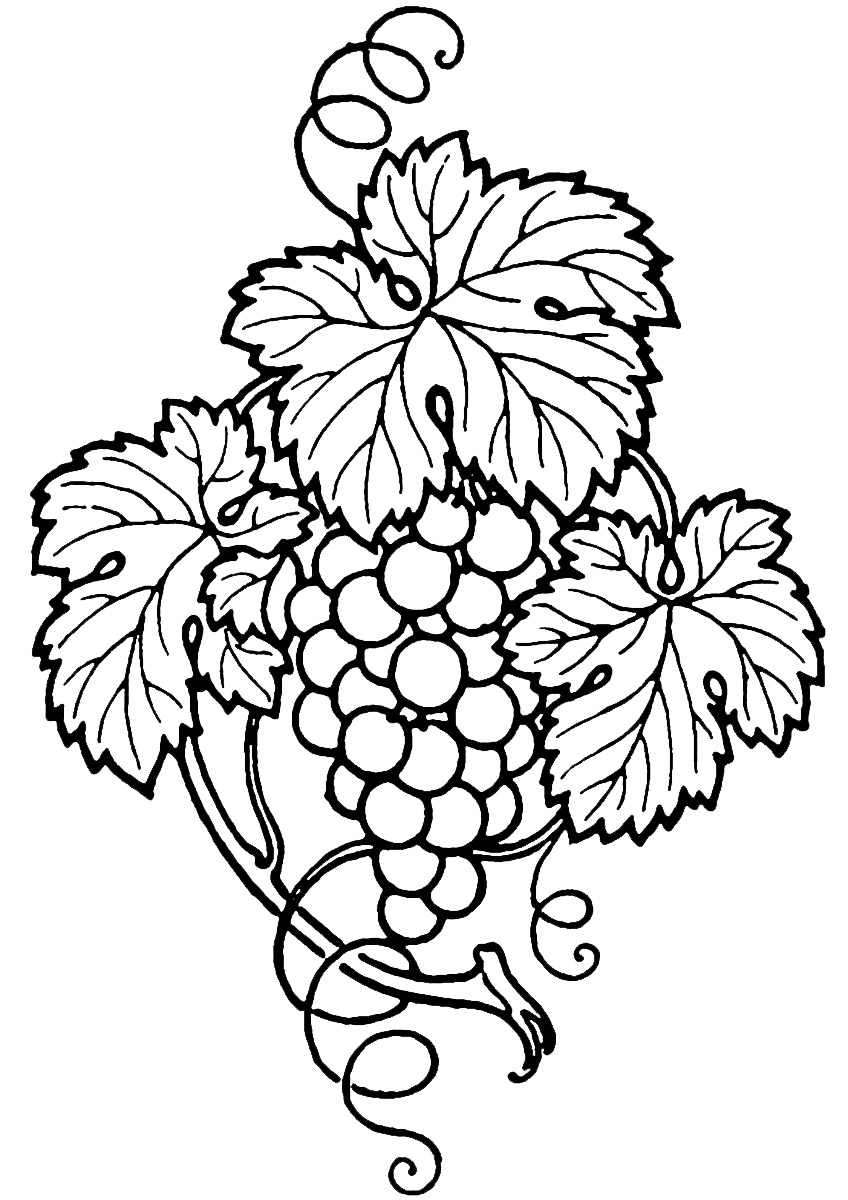 zinfandel coloring pages   Wine Grapes Drawing at GetDrawings.com   Free for personal ...