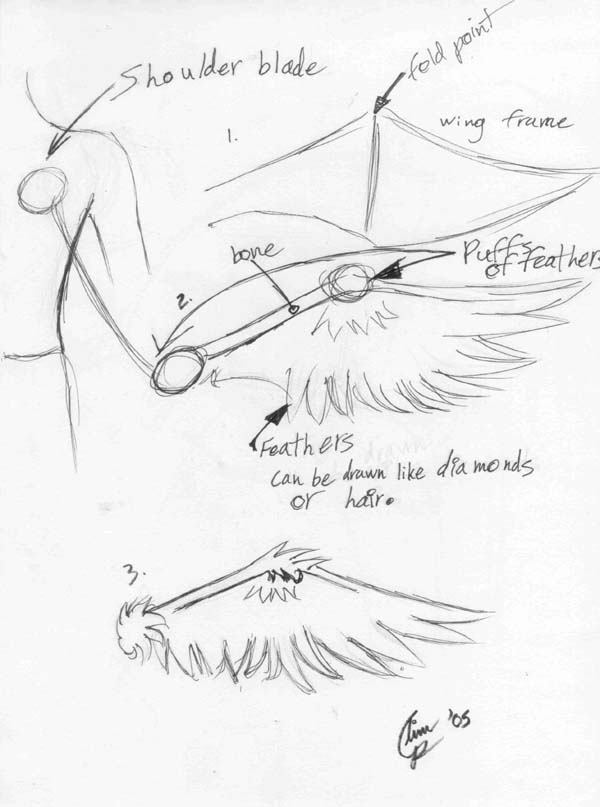 600x807 Wing Drawing Tutorial By Tears And Feathers