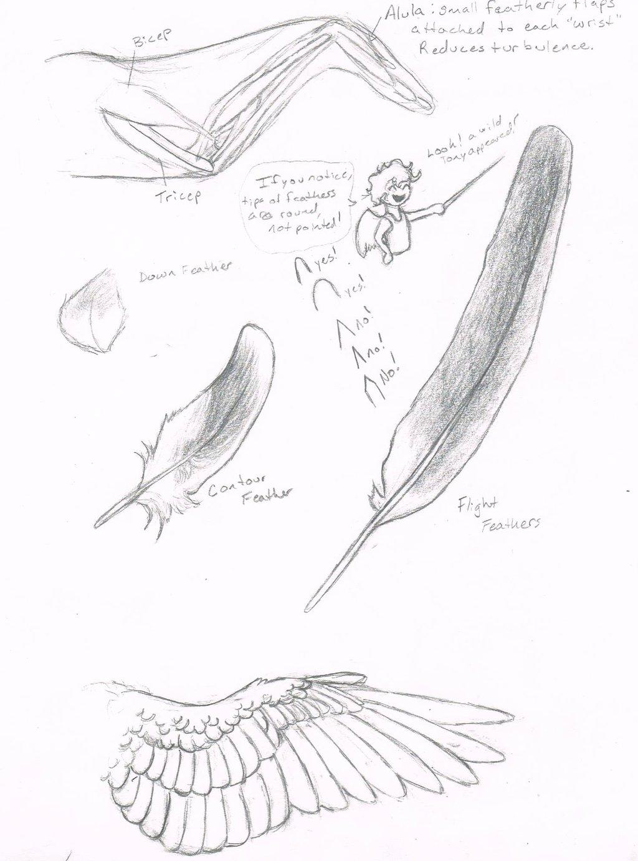 1024x1382 Wing Tutorial Part 2.5 Anatomy By Jackofalltrades0097
