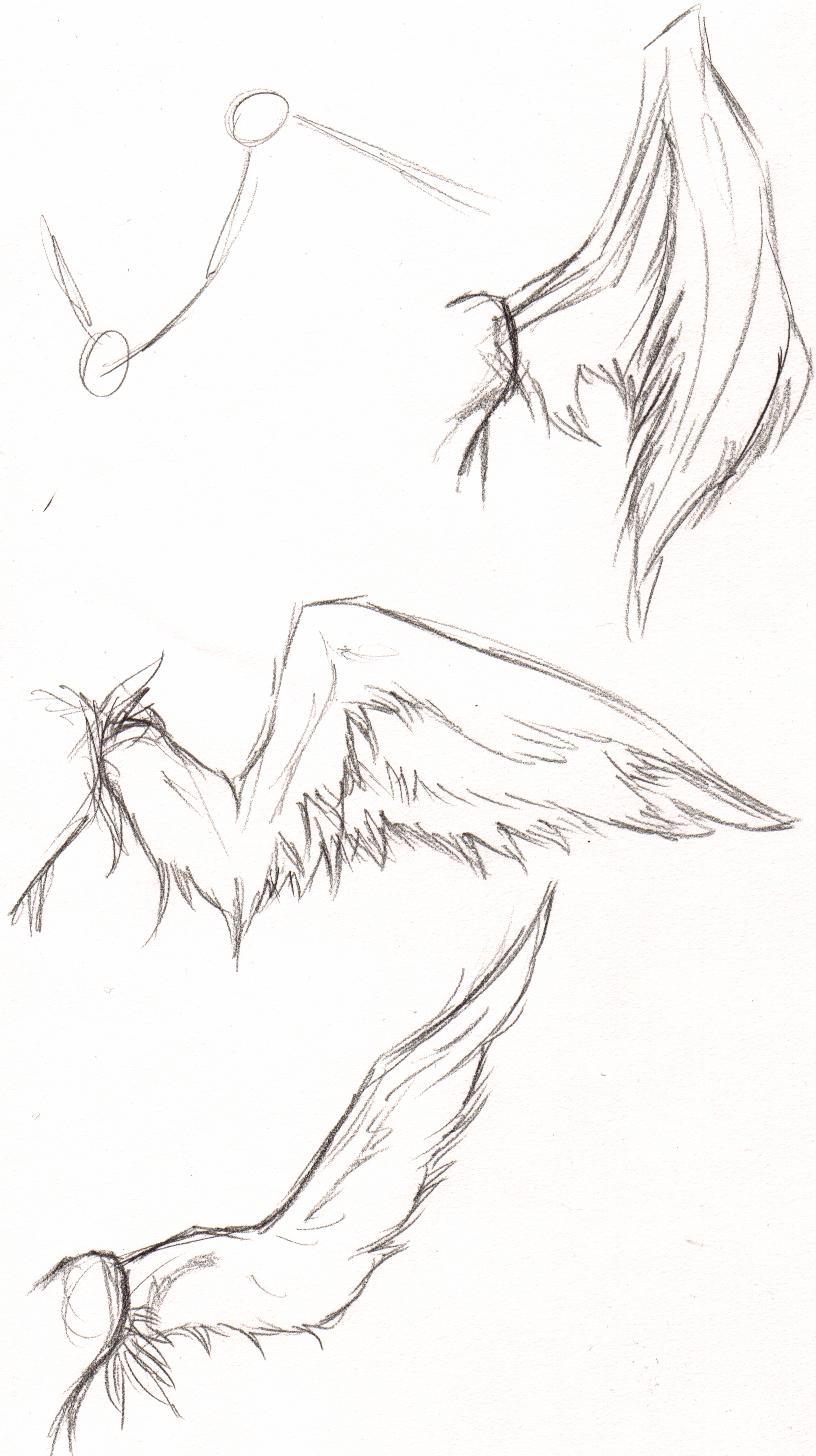 816x1456 Wing Tutorial By Bayne