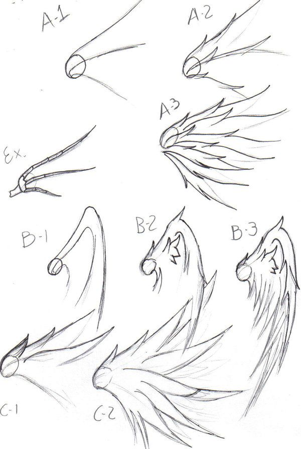 600x896 Wing Drawing Tips By On @