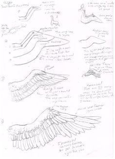 236x324 Feathers Tutorial 2 Flying By