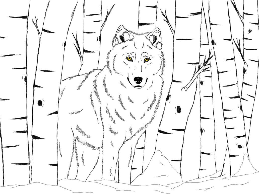 1032x774 Winter Wolf By Coreythewolftwc