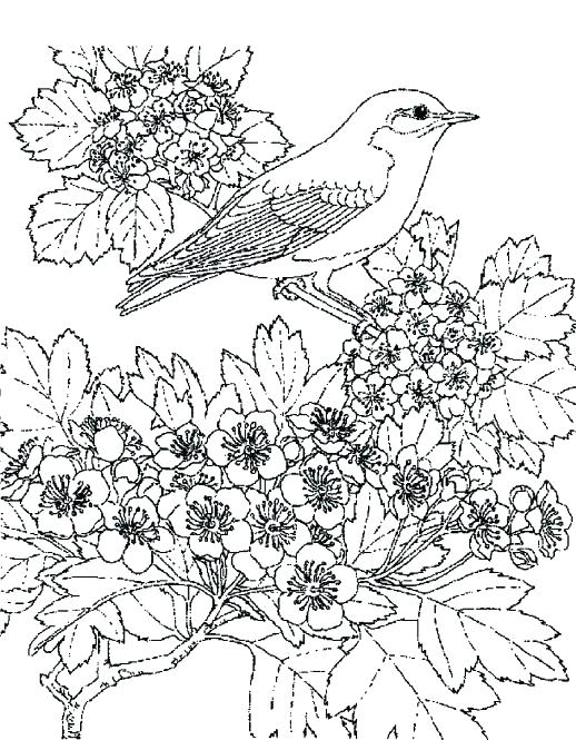 518x665 Winter Scene Coloring Page Snow Pages Download Color Murs
