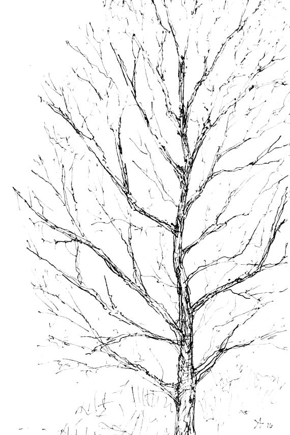 570x856 Pen Amp Ink Drawing Of Winter Tree