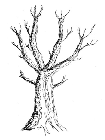 363x483 Winter Tree + Hiatus Creativeliz