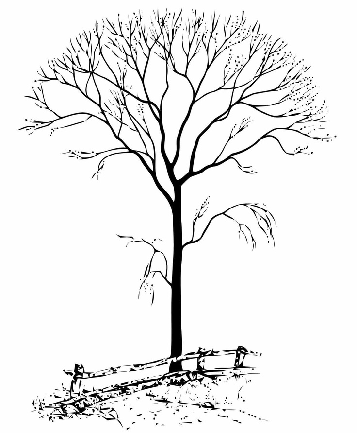 Winter Tree Drawing at GetDrawingscom Free for personal use