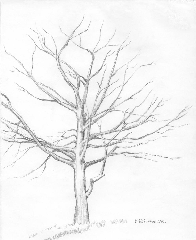 992x1212 Winter Tree Drawing Pics