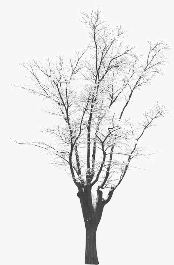 605x923 Winter Trees, Snowflake, Winter, Cold Png And Psd File For Free