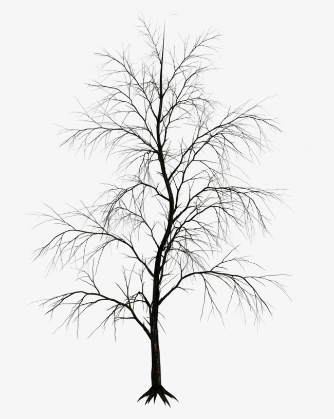 650x815 Winter Trees, Winter, Trees, Bald Png Image For Free Download