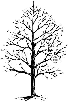 236x351 Trees Drawings Sketch Of Winter Tree By Judith M. Feingold