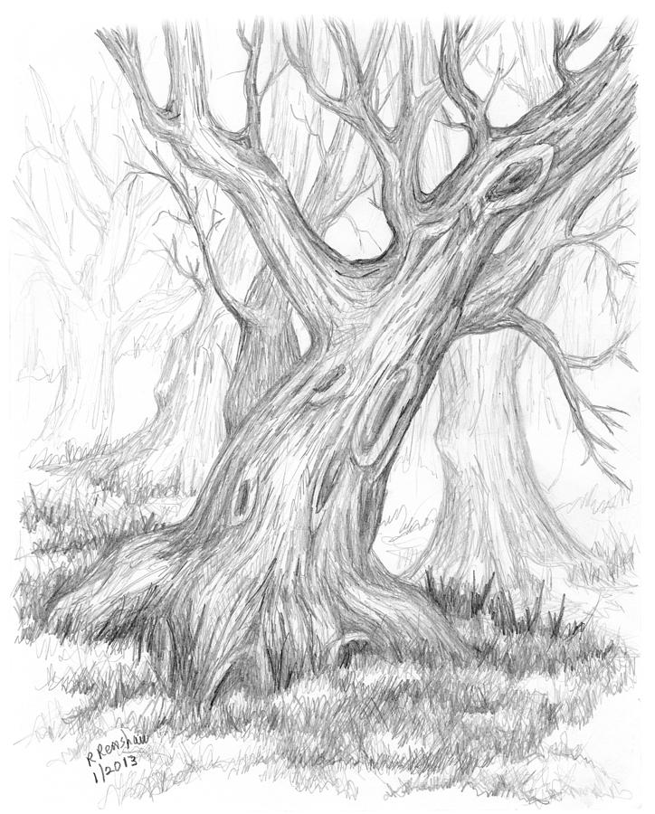 724x900 Leaning Tree In Winter Drawing By Ruth Renshaw