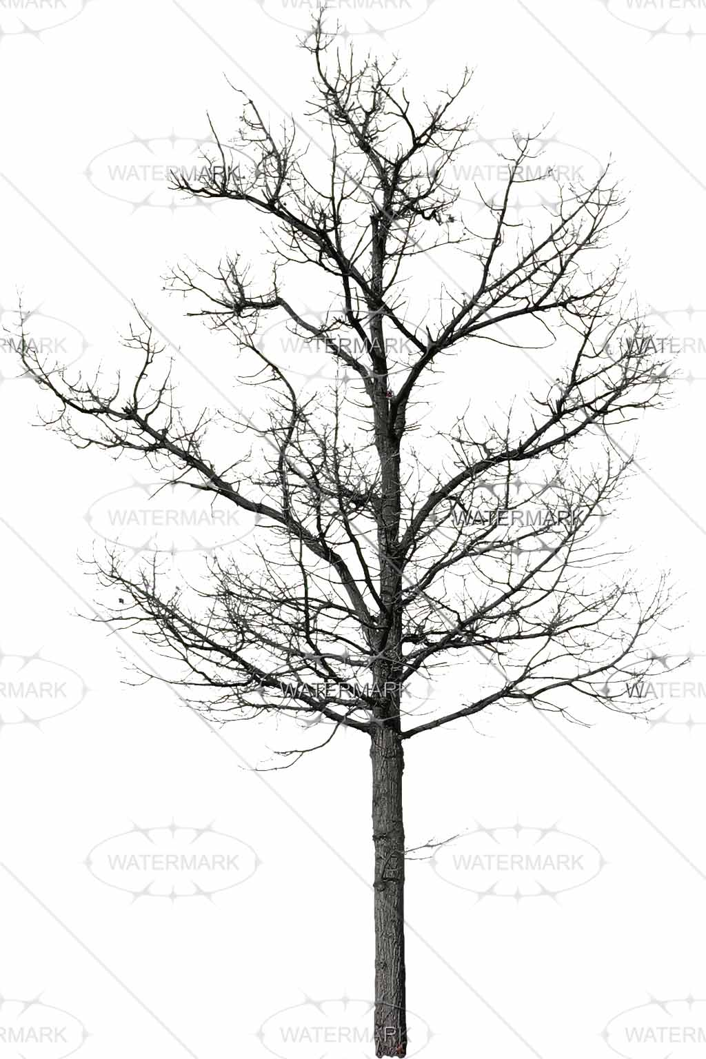 Winter Trees Drawing