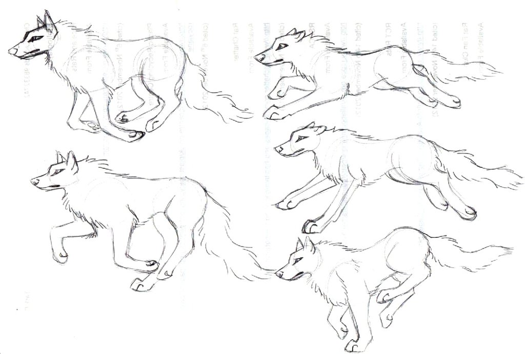 Wolf Anatomy Drawing At Getdrawings Free For Personal Use Wolf