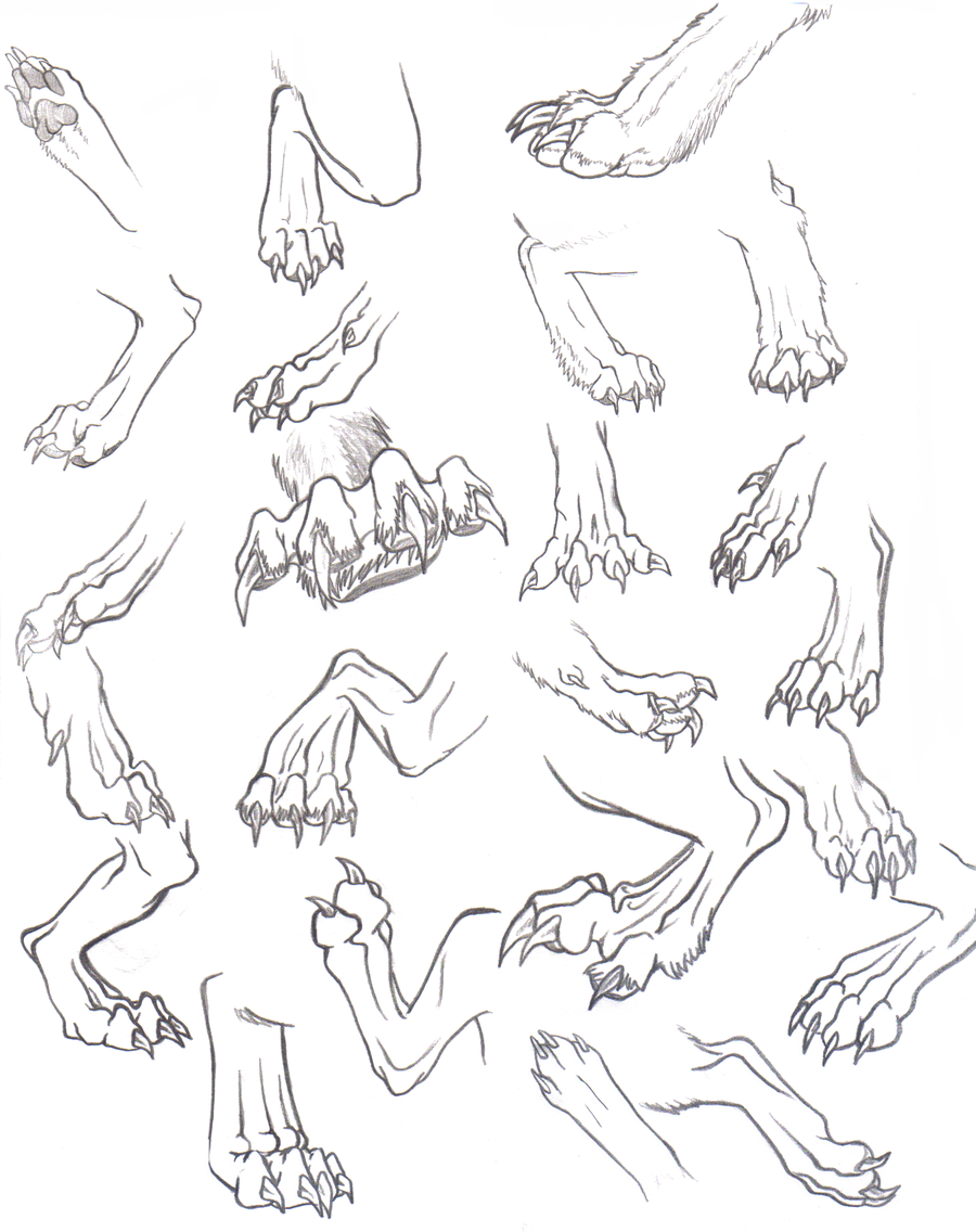 Wolf Anatomy Drawing at GetDrawings.com | Free for personal use Wolf ...