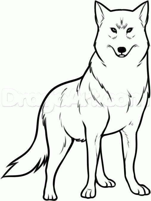 Wolf Animal Drawing