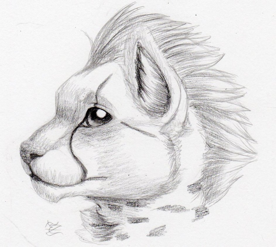 943x847 Daily Drawing Day 268 Cheetah Cub Quickie By Midnighthuntingwolf