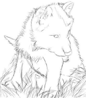 Charming 359x409 Wolf Cub Sketch By Deaths Anti Venom On DeviantArt