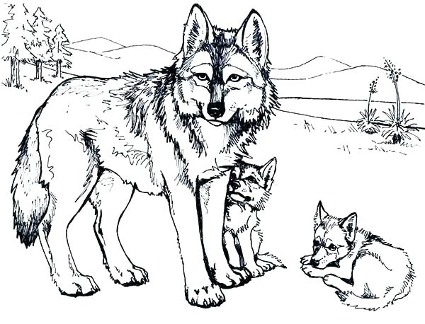 600x458 Coloring Pictures Of Wolves Winged Wolf Cub By Little Printable