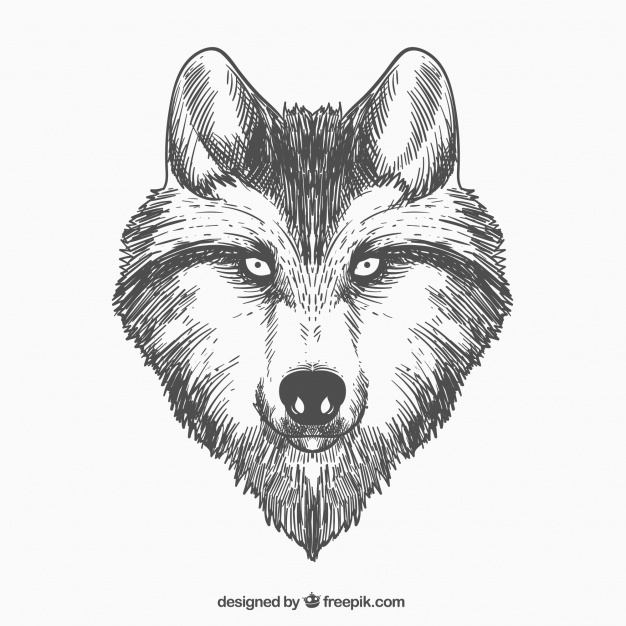 626x626 Hand drawn wolf face Vector Free Download