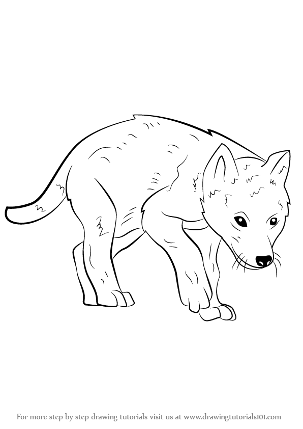 596x842 Learn How to Draw a Wolf Pup (Wild Animals) Step by Step Drawing