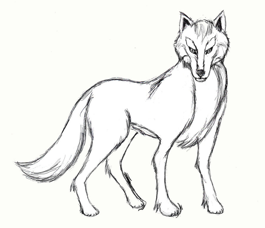 900x774 Wolf Body Pencil by MarissaWalker on DeviantArt