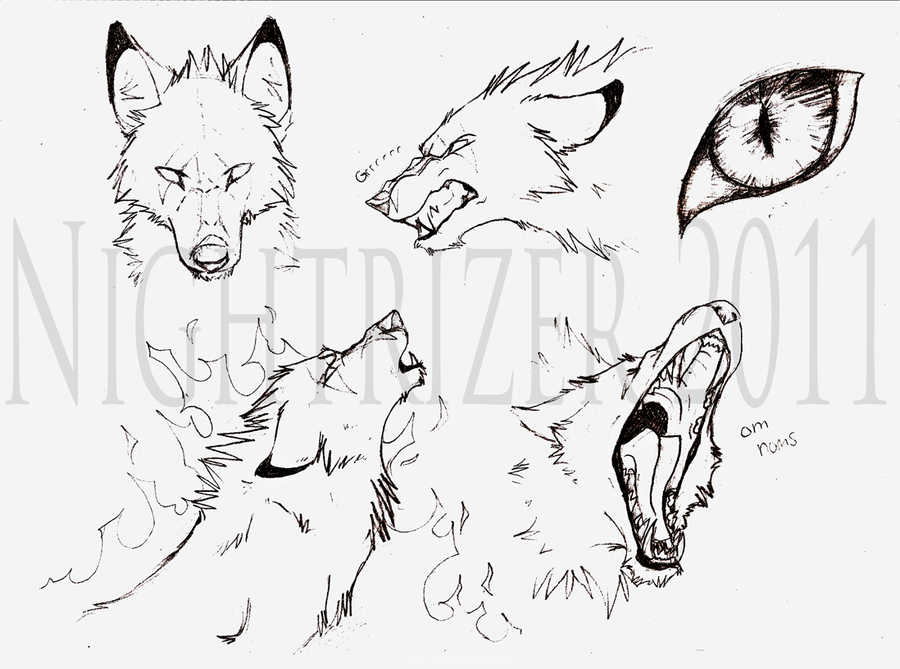 900x669 Baskabar Wolf Sketches by Nightrizer on DeviantArt