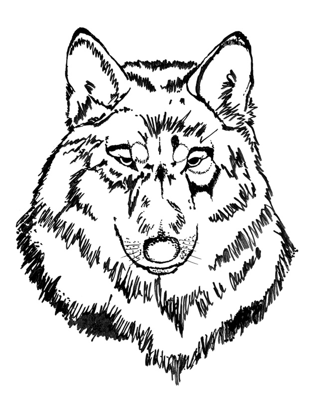 Wolf Drawing Book at GetDrawings.com | Free for personal use Wolf ...